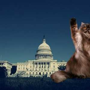 Ban declawing en washington, d.c.